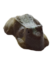 Dusted Frog